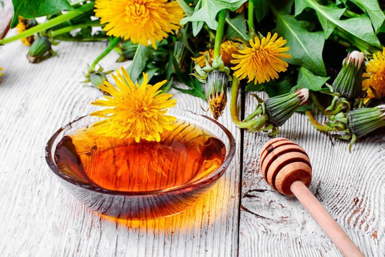Opskrift på mælkebøttesaft og mælkebøtte-honning